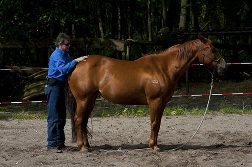 Bang voor paarden