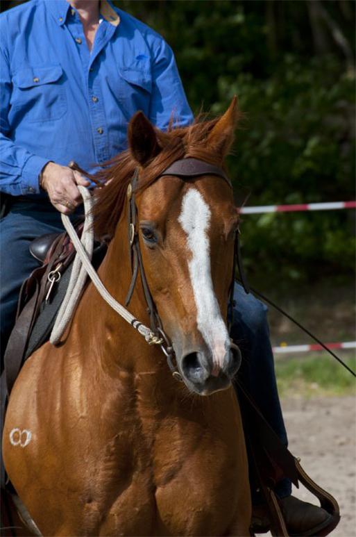 Dressuur & Horsemanship